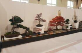 Nationale Bonsaiausstellung Hausen am Albis (2)