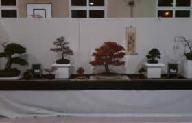 Nationale Bonsaiausstellung Hausen am Albis (3)