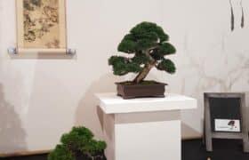 Nationale Bonsaiausstellung Hausen am Albis (7)