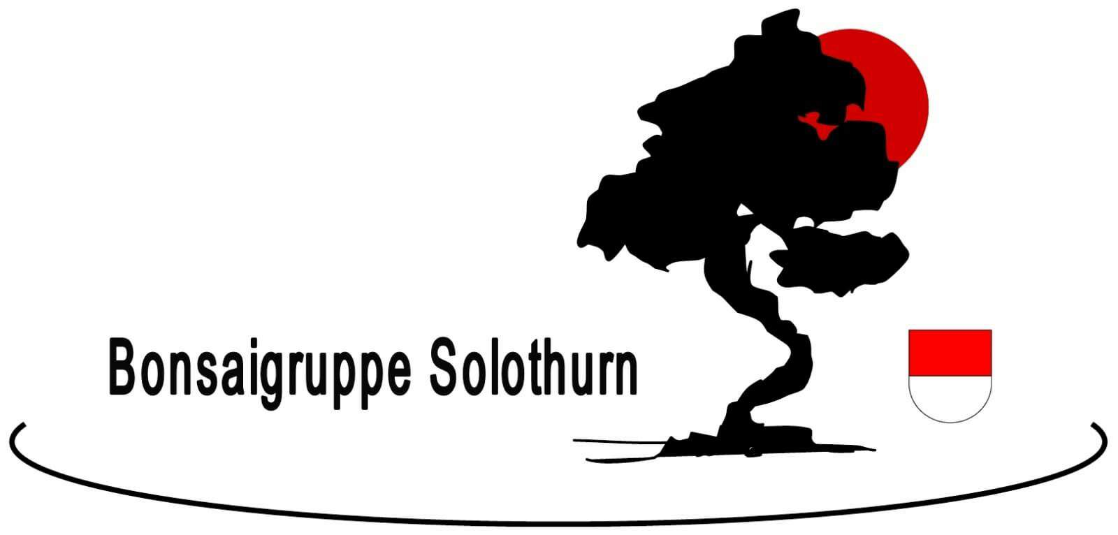 Bonsaigruppe Solothurn